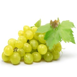 Biological White Grape  : Moisturizing, Illuminator, Tonifying and Firming