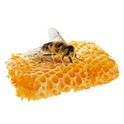 Royal Jelly  : rejuvenating, Balancing and Moisturizing